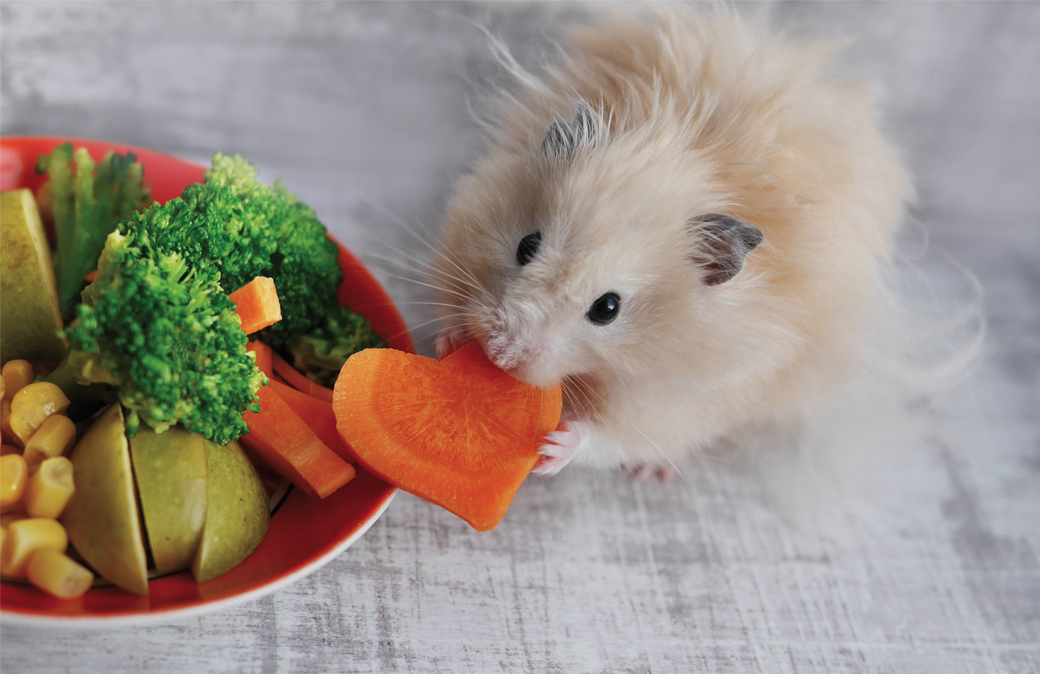 which veggies and fruit an i give to my hamster